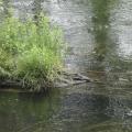 rzeka krutynia 9