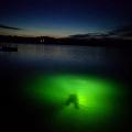 nurkowanie_nocne
