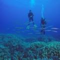 2017_Egipt_Daedalus & Brothers Islands_12