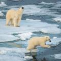 spitsbergen-nurkowanie-36